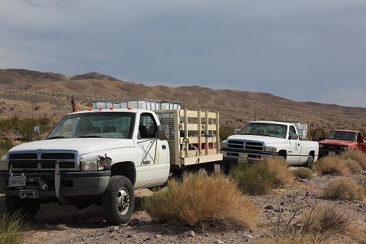 Water Hauling for bighorn sheep